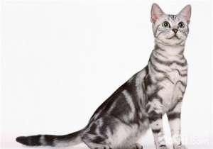 猫咪感冒的治疗原则-猫咪常见病